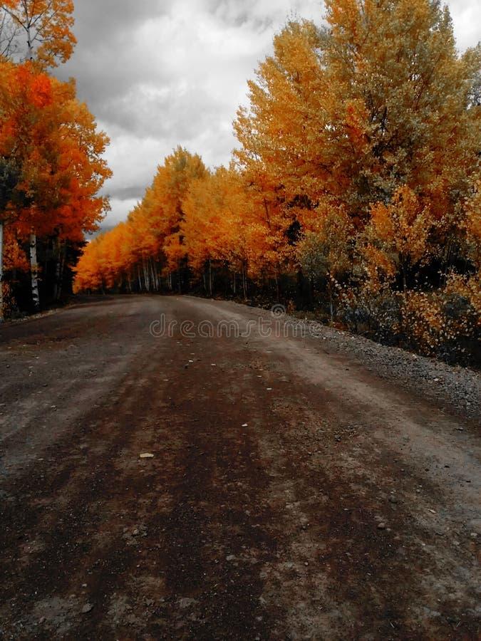 Chemin de terre de chute photographie stock