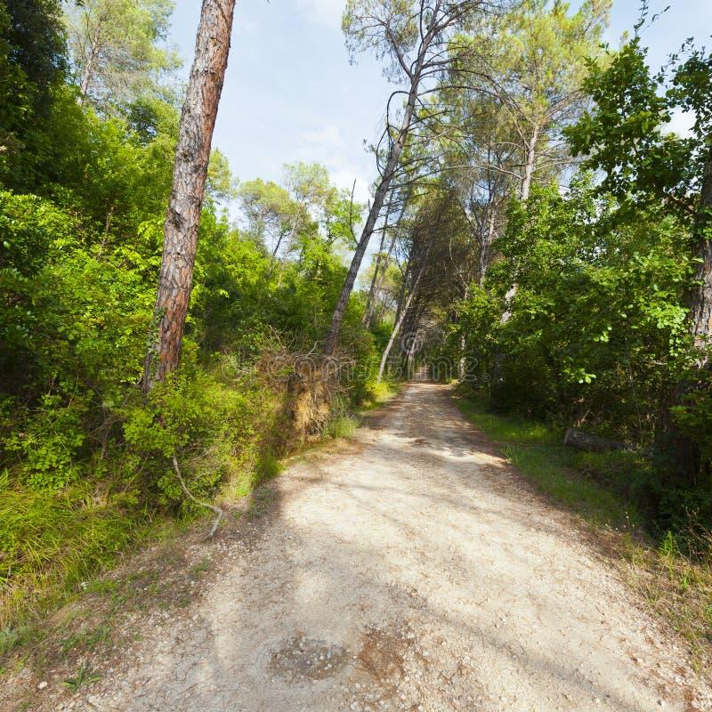 Chemin de terre dans la forêt photos stock