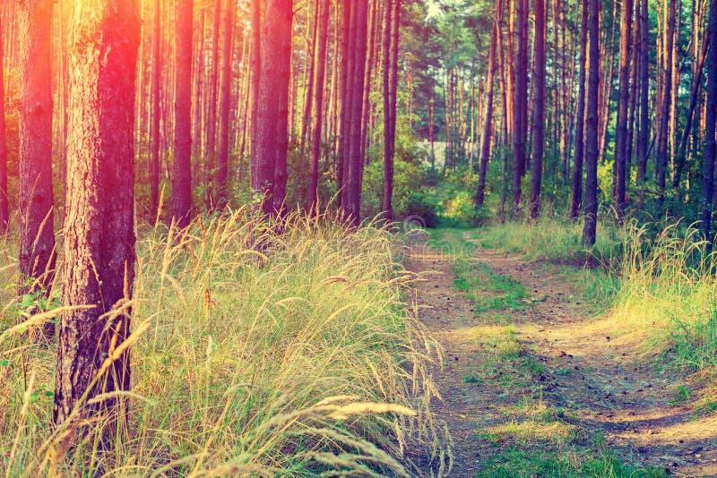 Chemin de terre dans la forêt images stock