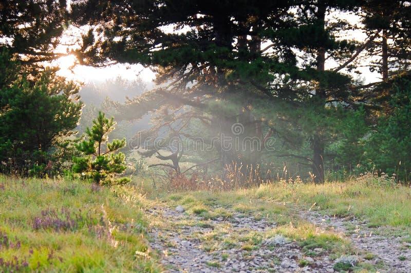 Chemin de terre dans la forêt au coucher du soleil images libres de droits