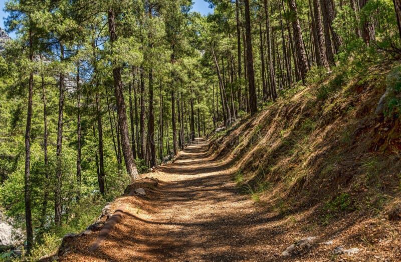 Chemin de terre dans la forêt avec de belles ombres image libre de droits
