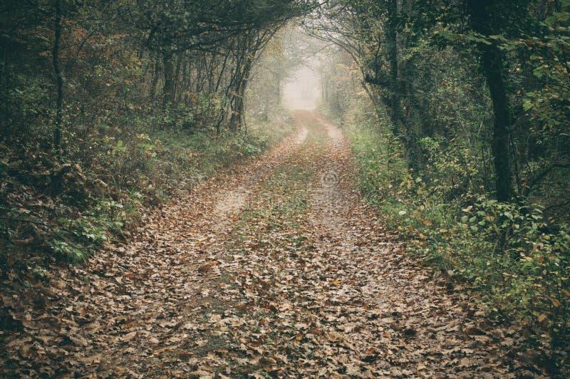 Chemin de terre dans la magie et la forêt brumeuse de hêtre de matin photo stock