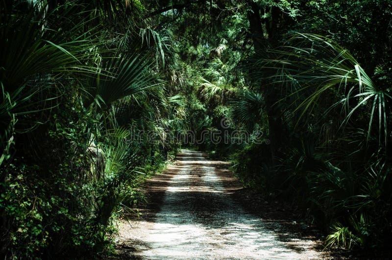 Chemin de terre dans la sous jungle tropicale photographie stock