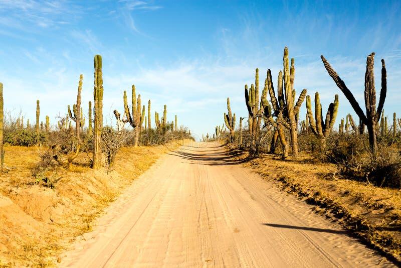 Chemin de terre de Baja images libres de droits