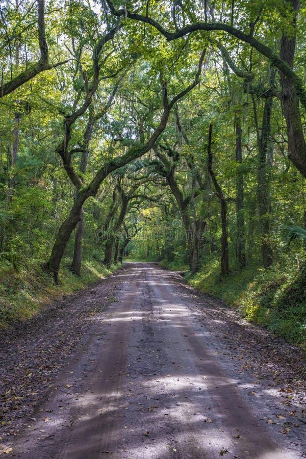 Chemin de terre de Lowcountry avec des chênes à la plantation de baie de botanique en île d'Edisto photographie stock libre de droits
