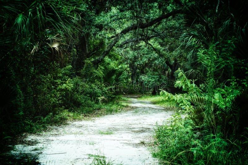 Chemin de terre menant dans la région sauvage subtropicale photographie stock