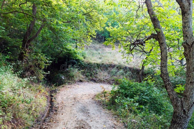 Chemin de terre par la forêt de montagne photo stock