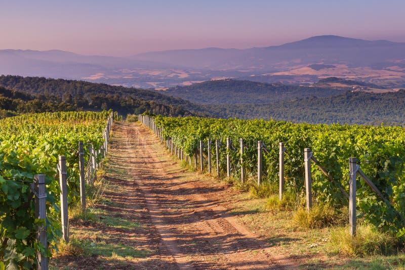 Chemin de terre par le vignoble de chianti photo libre de droits