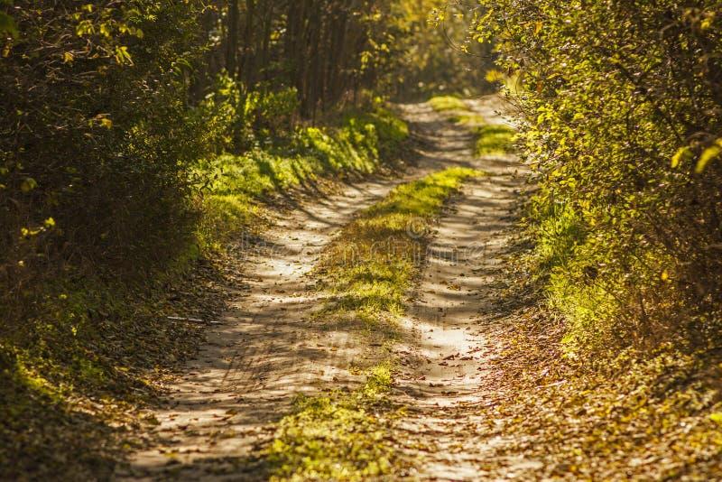 Chemin de terre rêveur de forêt dans le paysage d'automne images libres de droits
