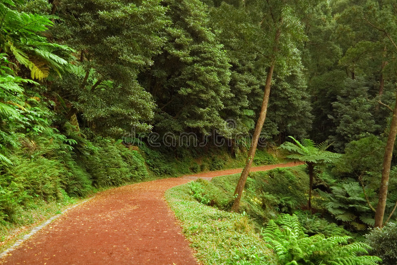 Chemin de terre rouge aboutissant dans la forêt, Açores photographie stock libre de droits