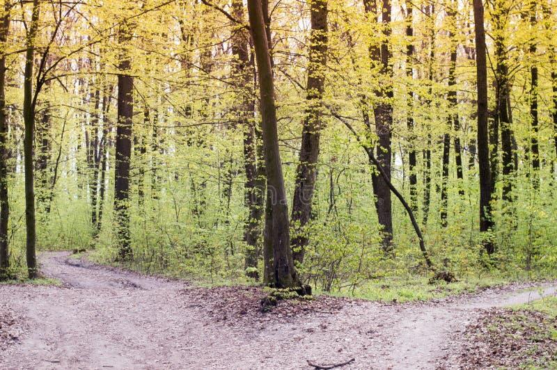 Chemin de terre vide qui se dédouble dans deux, concept pour des choix de la vie photos libres de droits