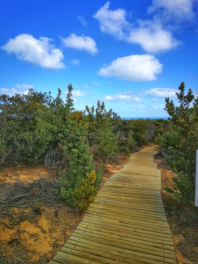 Chemin de trekking dans le désert de sommet, Perth, Australie photographie stock libre de droits