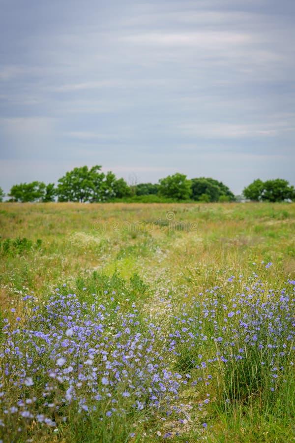 Chemin de wildflower de pays photos libres de droits