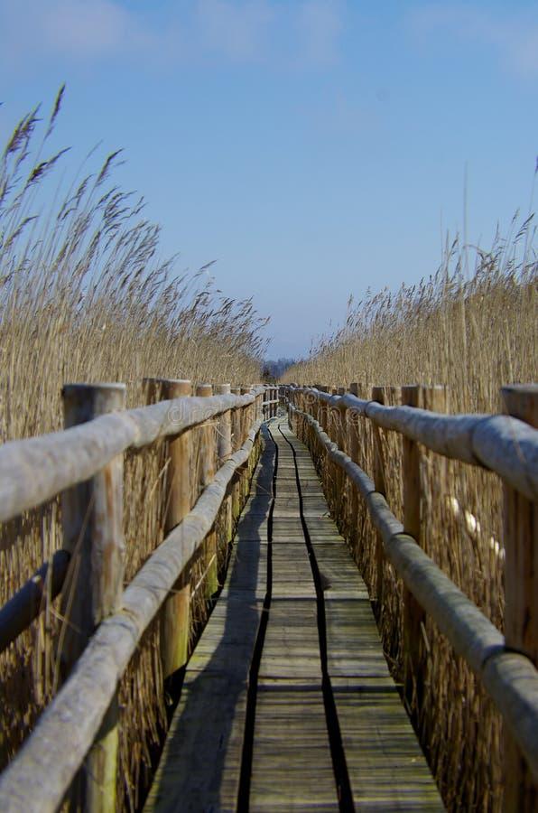 Chemin en bois à travers des roseaux image libre de droits