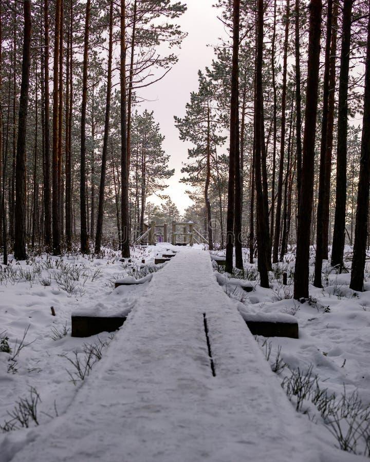 Chemin en bois étendu en parc national de Kemeri en Lettonie images stock