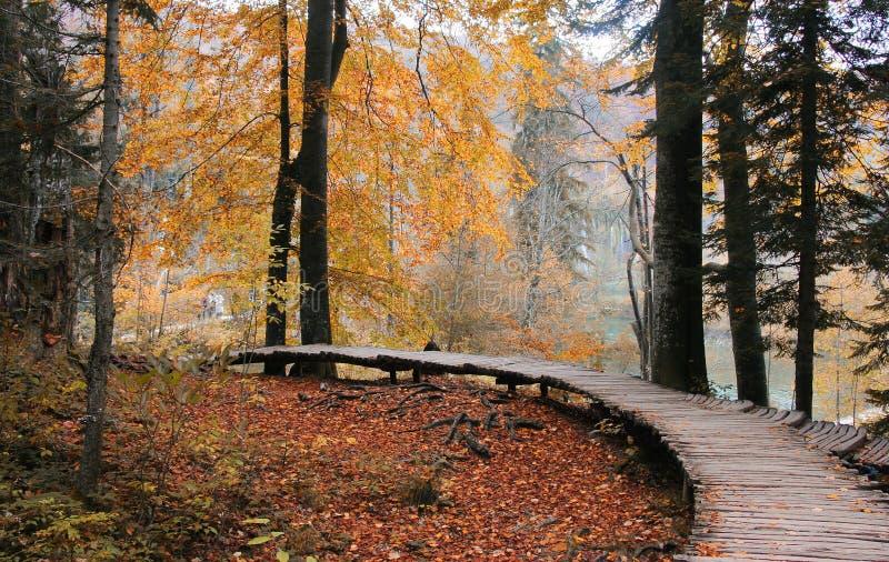 Chemin en bois dans la parité de national de Plitvice photos libres de droits