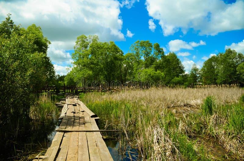 Chemin en bois de  de Ð dans les bois photographie stock libre de droits