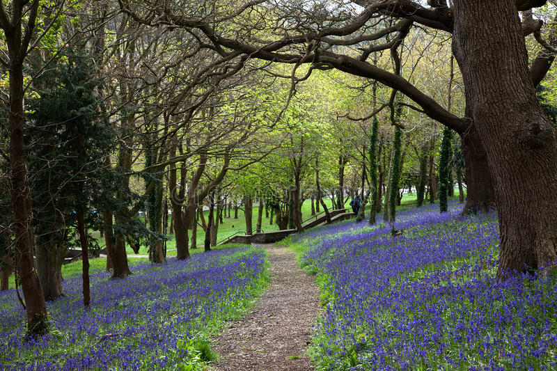 Chemin en bois de Bluebell images libres de droits