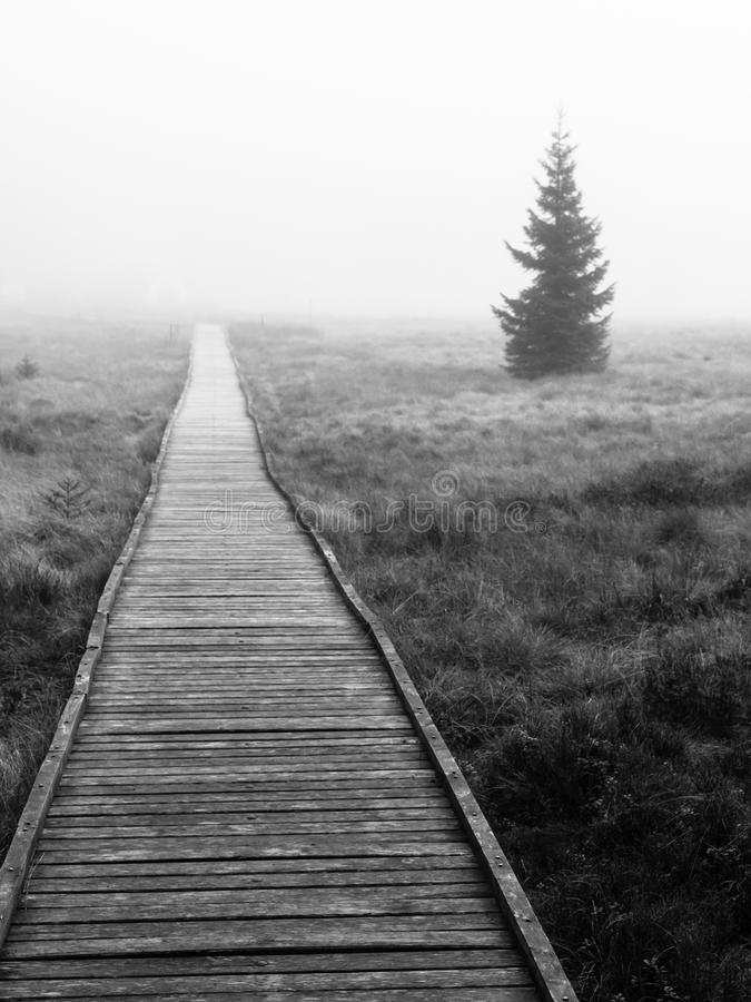 Chemin en bois en marais de tourbe en noir et blanc, Bozi Dar, République Tchèque, l'Europe Scène morne de paysage d'automne images libres de droits
