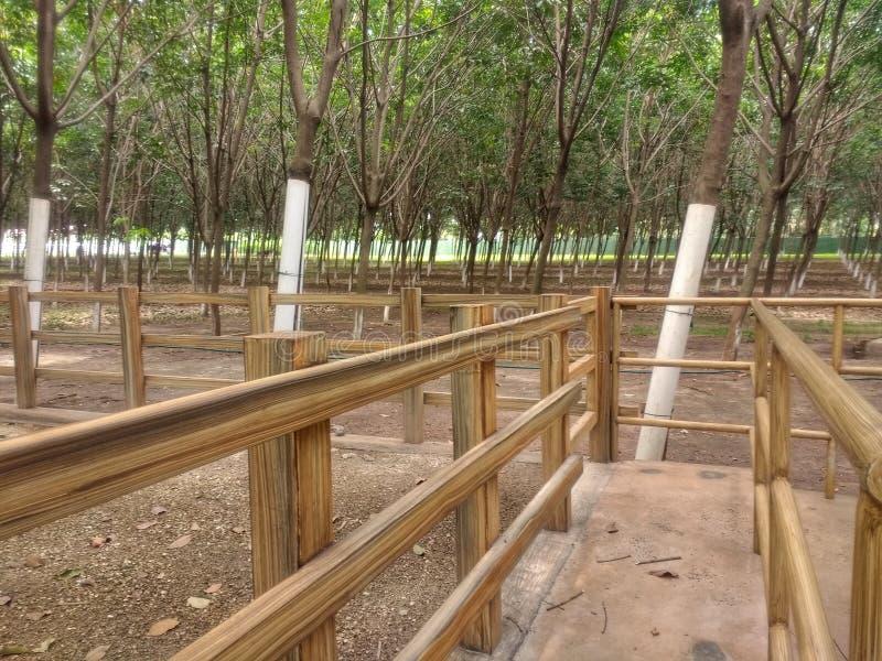 Chemin en bois entouré par les arbres et la saleté image libre de droits