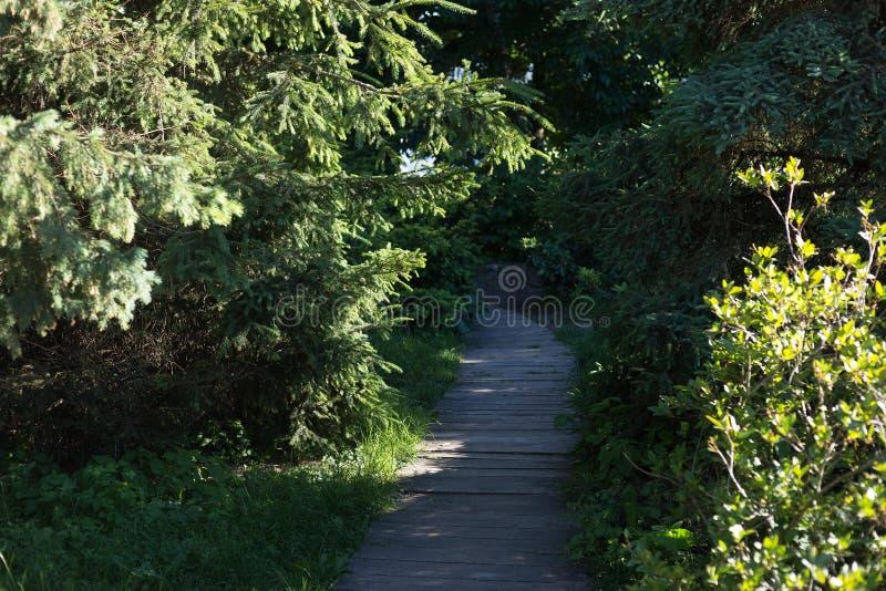 Chemin en bois en parc parmi des arbres photo libre de droits