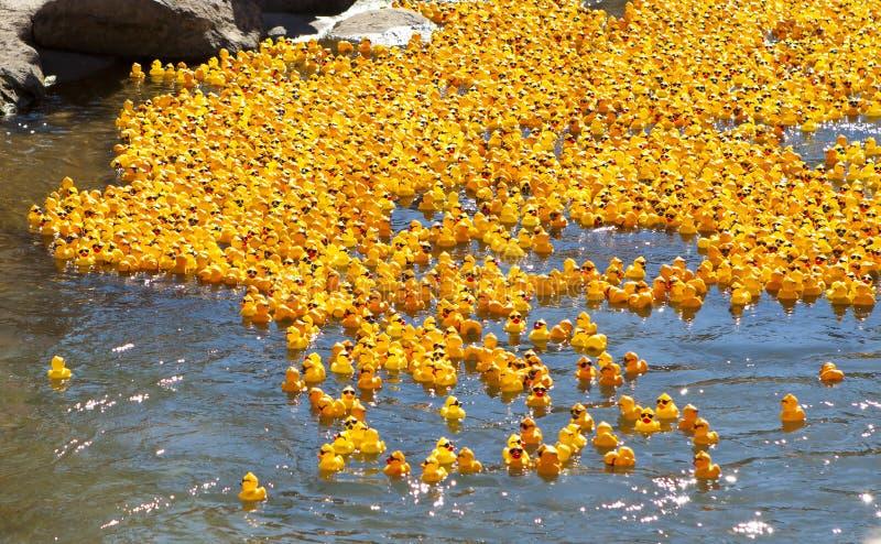 Chemin en caoutchouc de canard photos libres de droits