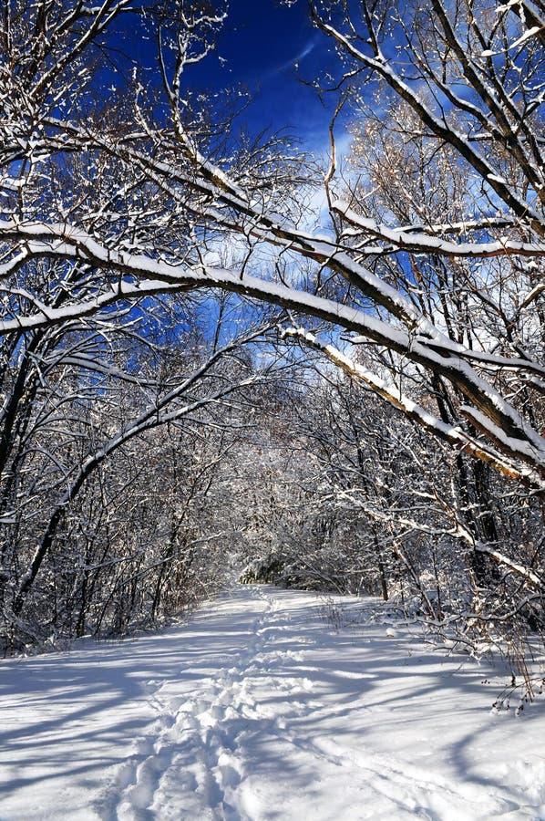 Download Chemin en forêt de l'hiver photo stock. Image du récréation - 4350446