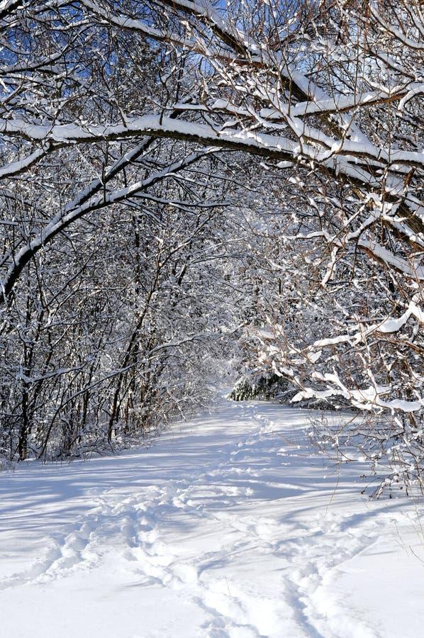 Chemin en forêt de l'hiver photographie stock libre de droits