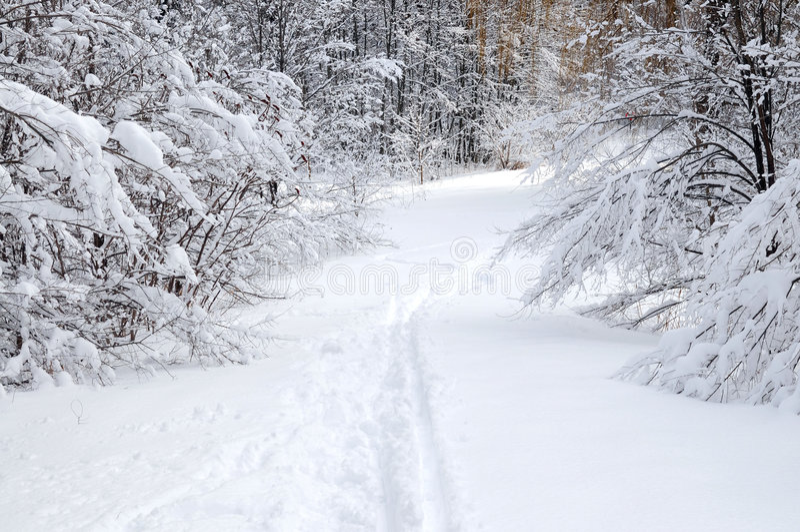 Chemin en forêt de l'hiver image libre de droits