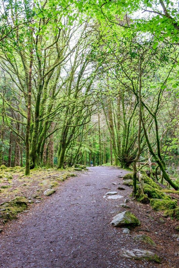 Chemin en parc national de Killarney image stock