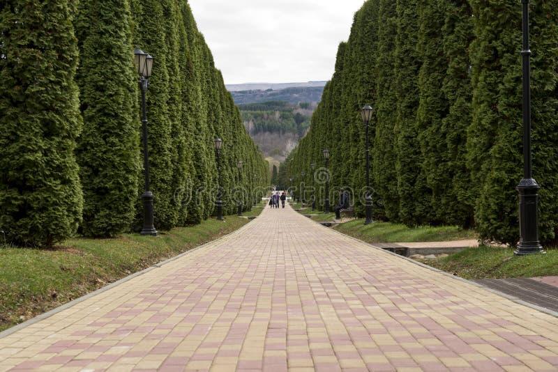 Chemin en parc parmi les arbres, allée photos stock