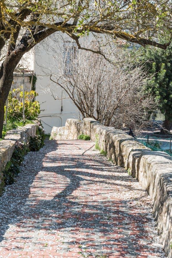 Chemin en pierre avec des arbres et des feuilles photo libre de droits