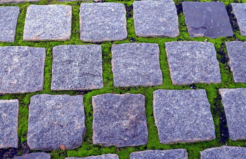 Chemin en pierre avec le lichen image libre de droits