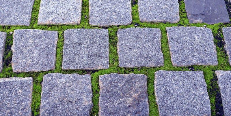 Chemin en pierre avec le lichen photo libre de droits