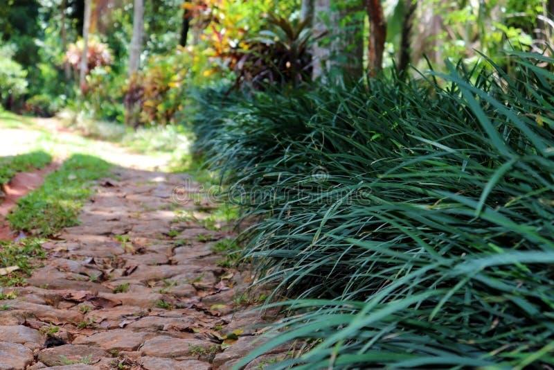 Chemin en pierre de promenade d'un jardin avec des buissons photos libres de droits