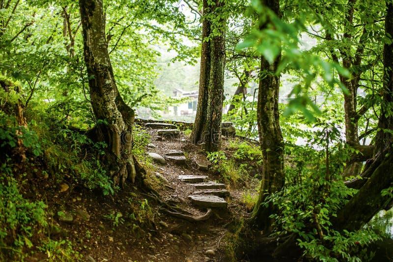 Chemin et étapes dans la belle forêt magique photos stock