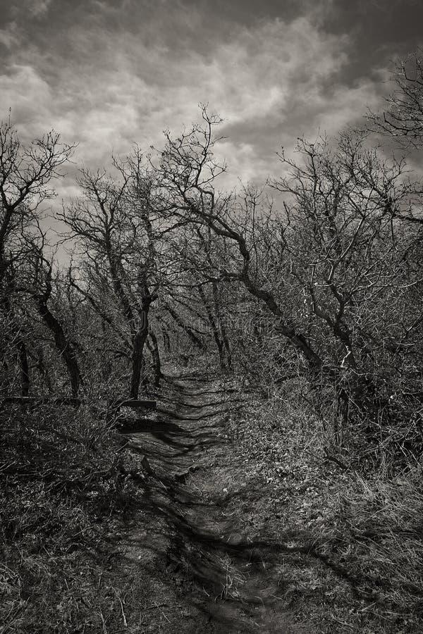 Chemin fantasmagorique rampant photo stock