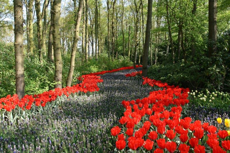 Chemin fleuri en bois images stock