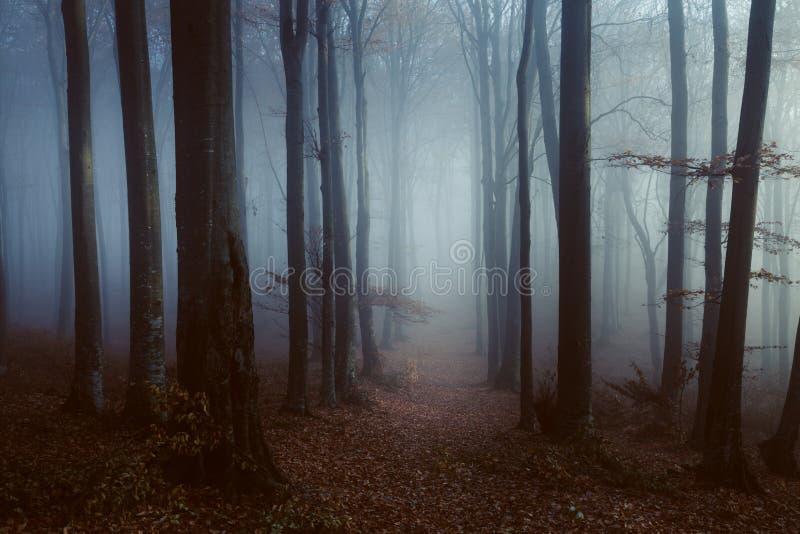 Chemin foncé et isolé dans la forêt brumeuse photos stock