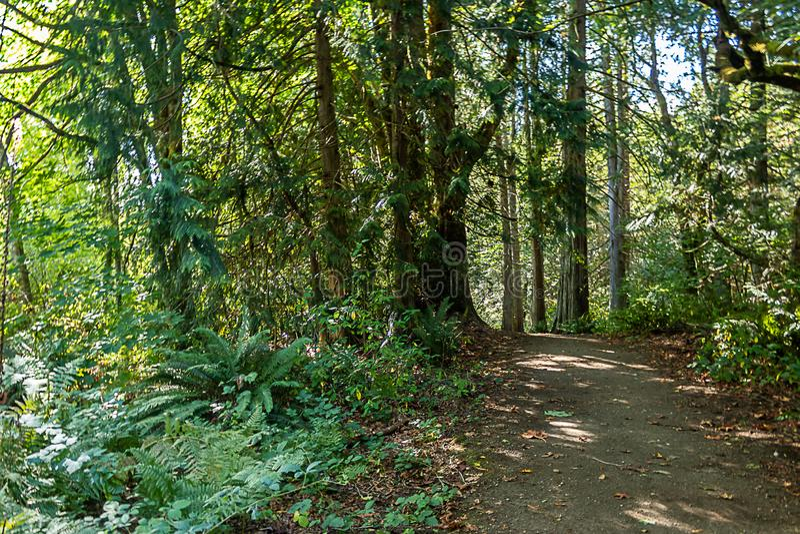 chemin foncé sous la grande forêt d'érable de feuille photo libre de droits