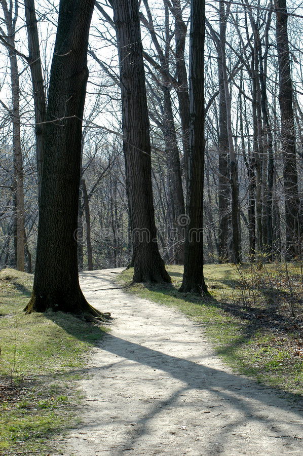 Chemin forestier   photographie stock