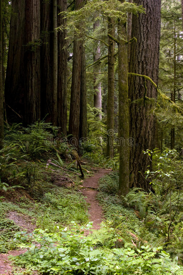 Chemin forestier photos libres de droits