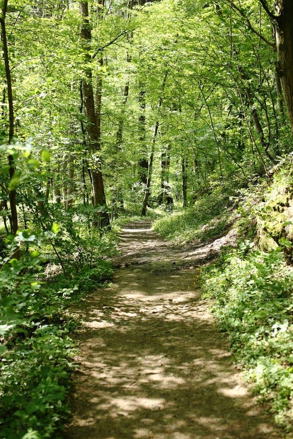 Download Chemin forestier image stock. Image du ombre, promenade - 56489899