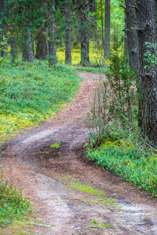 Download Chemin Forestier Aux Valeurs Maximales De Concentration Au Poste De Travail De KOH Photo stock - Image du centrale, lumineux: 77158316