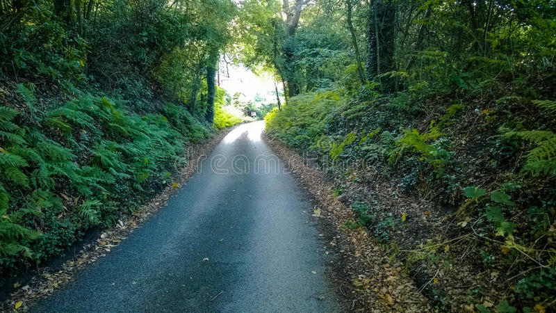 Chemin forestier aux valeurs maximales de concentration au poste de travail de KOH images stock