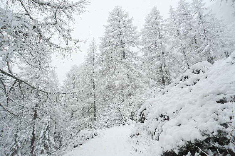 Chemin forestier bloqué par la neige dans les Alpes suisses images stock