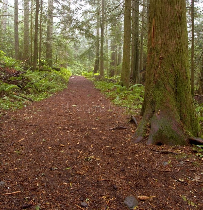 Chemin forestier brumeux images stock
