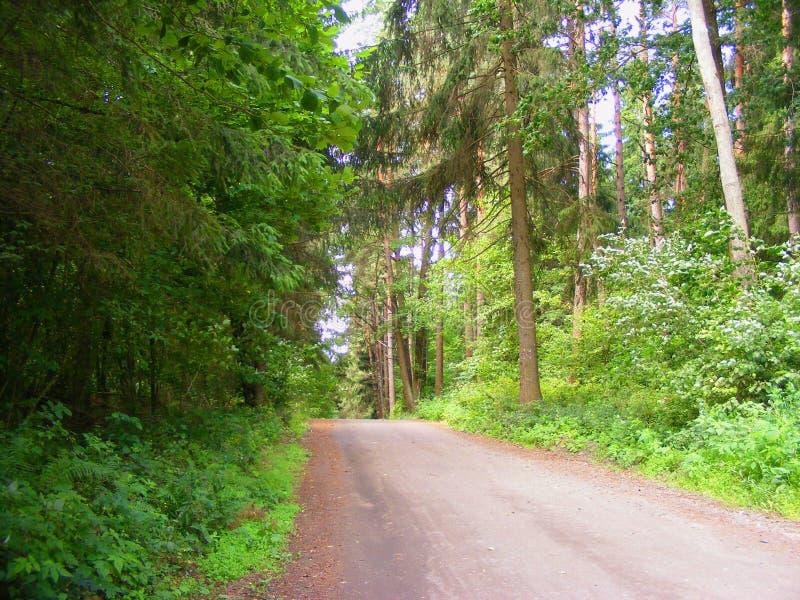 Chemin forestier d'été avec des rayons du soleil de début de la matinée images stock