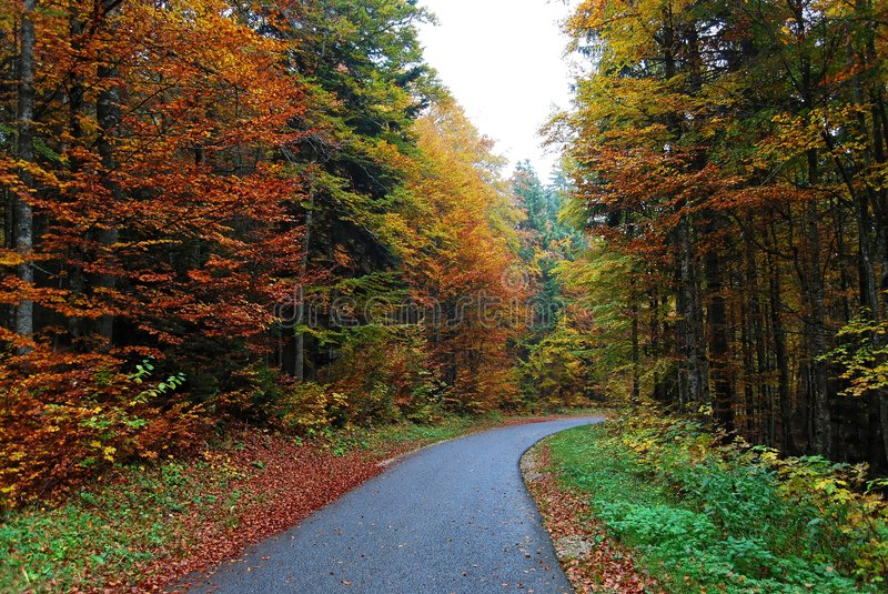 Chemin forestier d'automne image stock