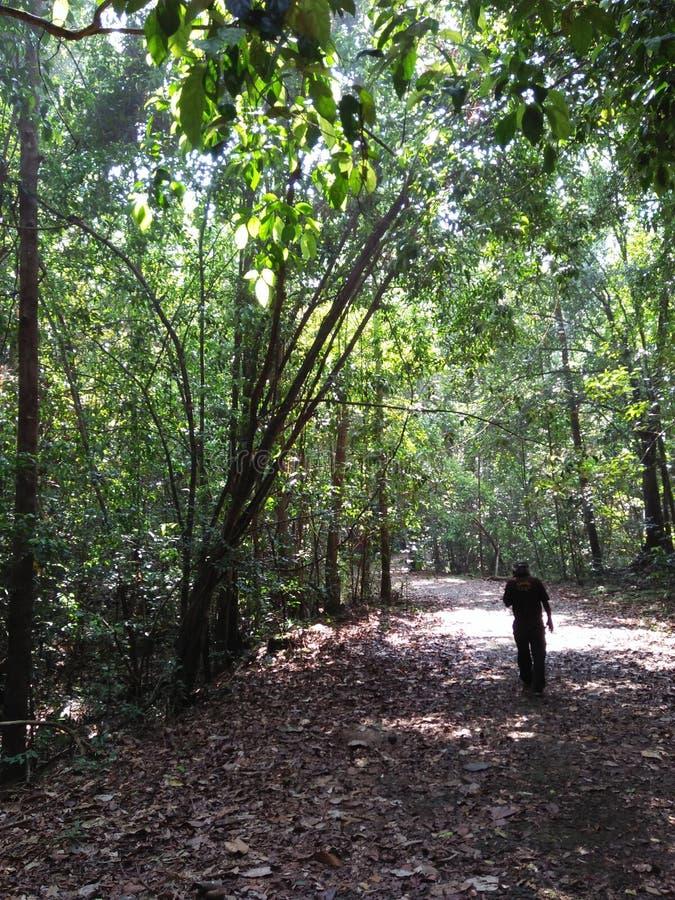Chemin forestier de Kanneliya photo libre de droits